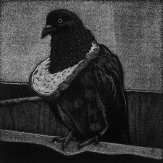 Pigeon elite 10x10cm / mezzotint / 2020